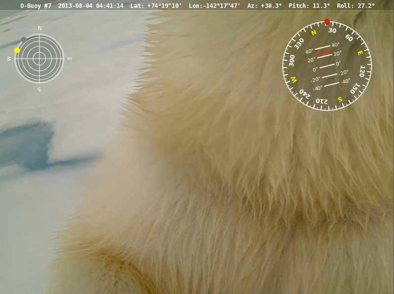 O-Buoy 7 image from August 4th 2013, showing a close up of a polar bear