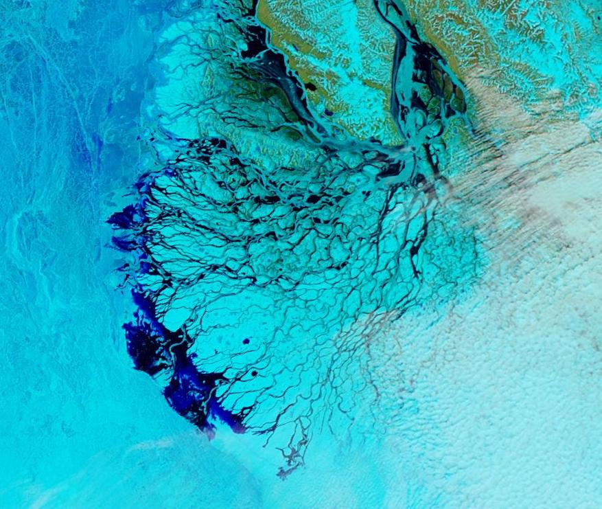 "NASA Worldview ""false-color"" image of the Lena Delta on June 3rd 2016, derived from the MODIS sensor on the Aqua satellite"